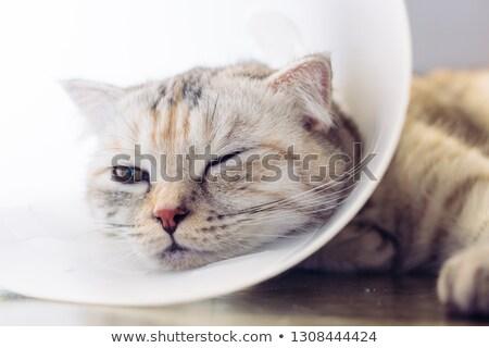 kot · posiedzenia · bed · smutne · głowie - zdjęcia stock © Komar