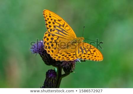 бабочка зеленые листья Солнечный природы лет зеленый Сток-фото © prill
