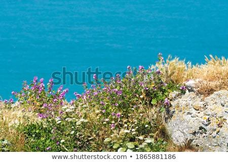 Peynir kır çiçeği otlar Stok fotoğraf © Photofreak