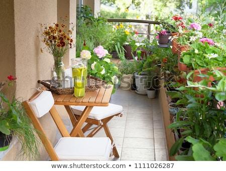 Varanda planta vermelho branco verde pote Foto stock © joker