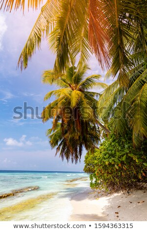Idyllic tropical beach in sunny day. Vertical panorama. Stock photo © moses