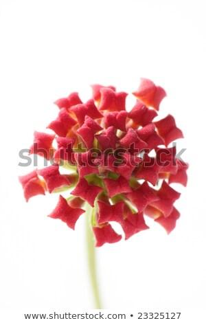 vermelho · erva · daninha · flor · blue · sky · jardim · verão - foto stock © lunamarina