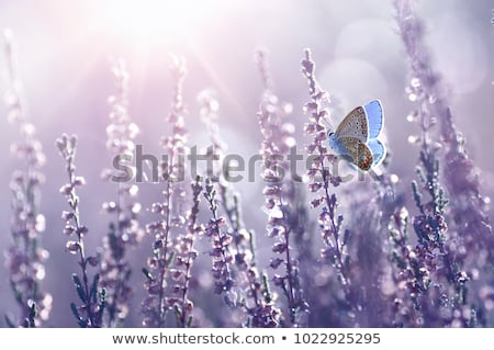 Bright color floral background with wings Stock photo © Elmiko