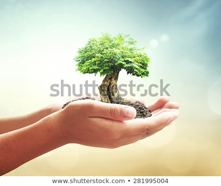 Green concept. Tree on the earth in hand stock photo © rufous