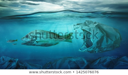 tropical fish swim among coral Stock photo © Mikko