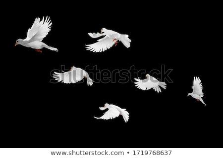 Blanco vuelo dos hermosa vuelo Foto stock © suemack