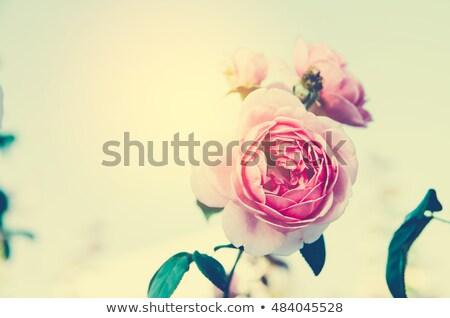 Romántica carta matrimonio San Valentín día boda Foto stock © Vg
