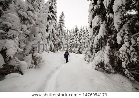 Сток-фото: морозный · день · гор · пейзаж · Панорама · Украина
