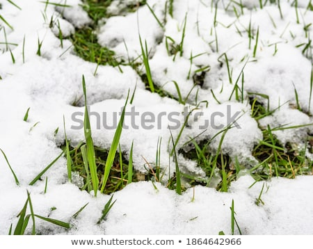 snow-covered land closeup winter day Stock photo © OleksandrO
