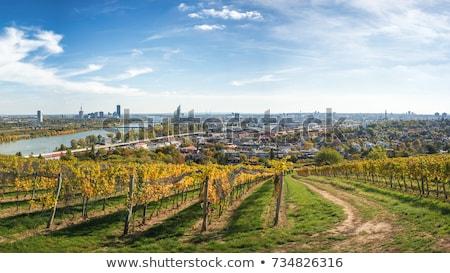 Légifelvétel mezőgazdasági tájkép Bécs Stock fotó © meinzahn