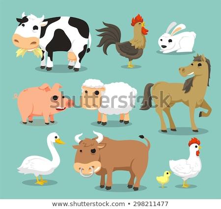 牛 コック ポスター 白 食品 背景 ストックフォト © bluering