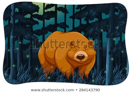 Medve aranyos dzsungel éjszaka sötét fehér Stock fotó © bluering