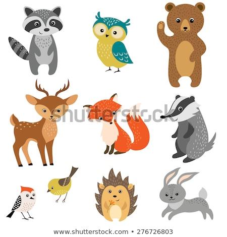 vector set of cartoon forest animals on a white background stock photo © natalya_zimina