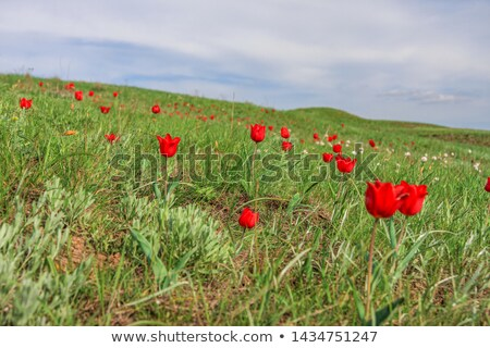 Spring steppe Stock photo © Novic