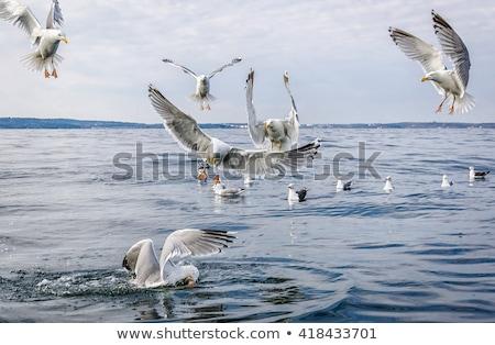 vadászat · hal · kikötő · étel · óceán · ipar - stock fotó © kb-photodesign