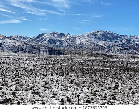 Landschap boom park sneeuwstorm sneeuw woestijn Stockfoto © tobkatrina
