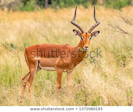 Kos kamera park utazás Afrika állatok Stock fotó © simoneeman