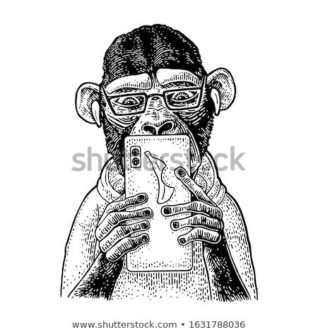 Macaco texto árvore projeto assinar Foto stock © Olena