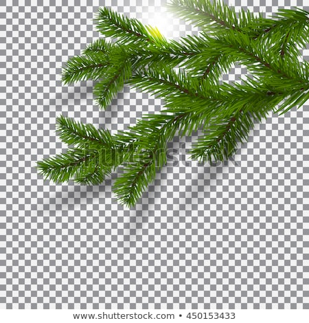 green Christmas spruce branch silhouette  Stock photo © Sonya_illustrations