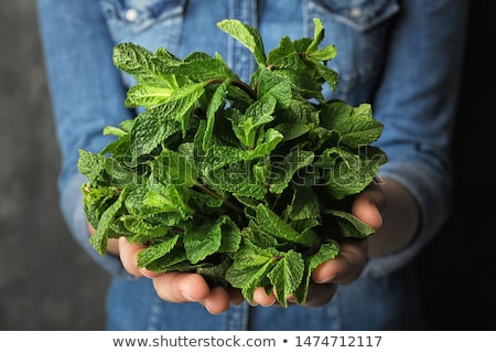 Mujer menta hojas mano femenino Foto stock © IS2