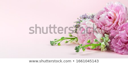 Fresh peony and lilac flowers stock photo © neirfy