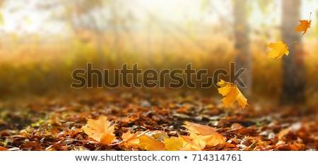 Dorado caer hojas otono brillante banner Foto stock © alexaldo