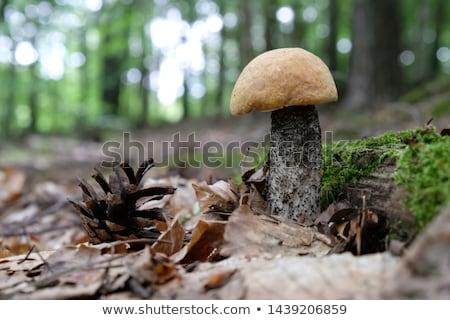 gomba · nő · moha · erdő · narancs · sapka - stock fotó © romvo