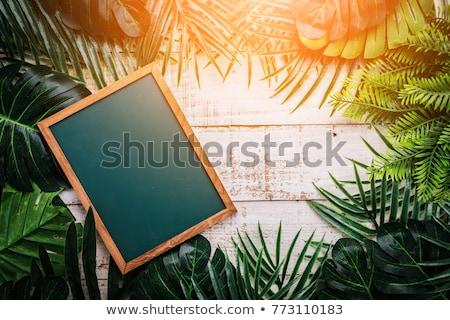 Creativa verano tropicales hoja de palma frescos maduro Foto stock © artjazz