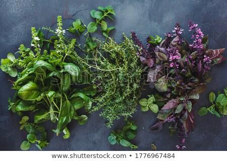 kişniş · büyüyen · çiftlik · gıda · yaprak · beyaz - stok fotoğraf © brebca