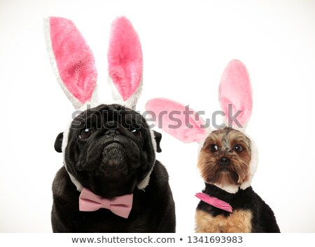 two funny looking dogs wearing easter bunny ears stock photo © feedough
