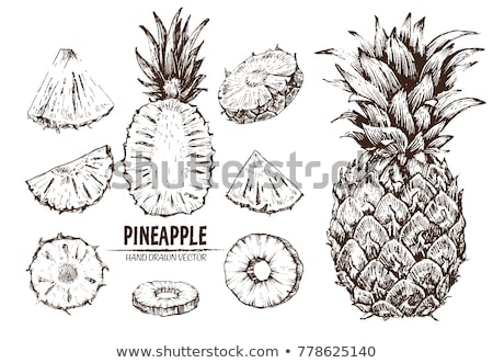 рисованной ананаса черный вектора белый продовольствие Сток-фото © Artspace