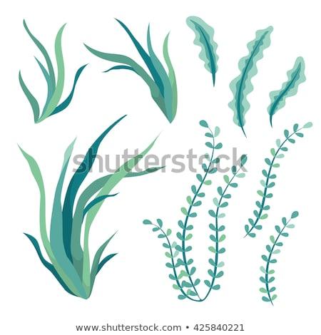 underwater river algae seaweed hand drawn vector stock photo © pikepicture