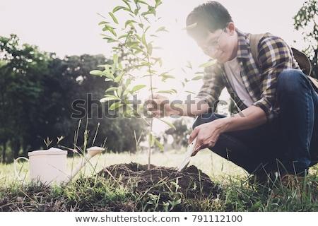 Jonge man boom werken tuin Stockfoto © Freedomz