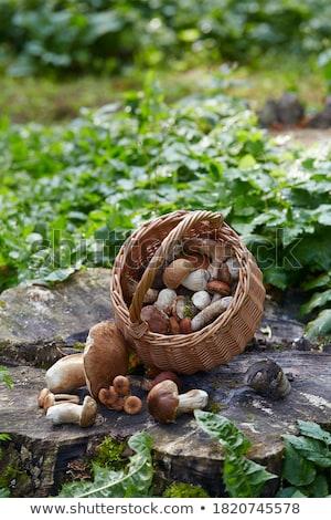 Di funghi porcini rovere legno autunno funghi crescere Foto d'archivio © romvo