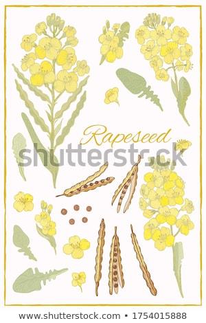 oleju · warzyw · butelek · szkła · tabeli · wiosną - zdjęcia stock © saphira