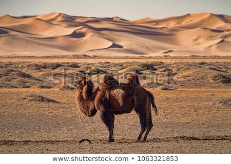 Gobi desert Stock photo © joyr