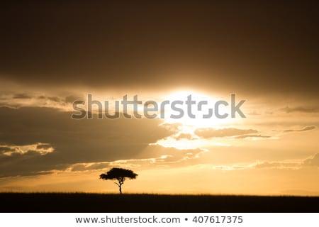 Baum · sunrise · schönen · african · See · natürlichen - stock foto © ajn