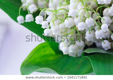 muguet Stock photo © M-studio
