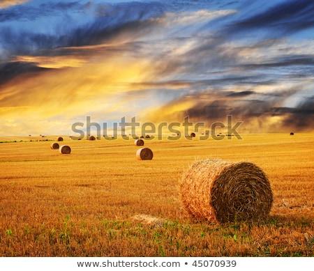 Farm field with hay bales Stock photo © IMaster