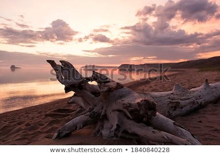 kilátás · piros · óceán · kövek · több · citromsárga - stock fotó © ziprashantzi