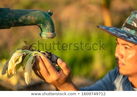 Seasoned Water Pump Stock photo © blinztree
