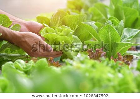 саду · Салат · таблице · продовольствие · домой - Сток-фото © wavebreak_media