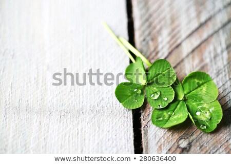 клевера · трава · аннотация · лист · зеленый · белый - Сток-фото © elisanth