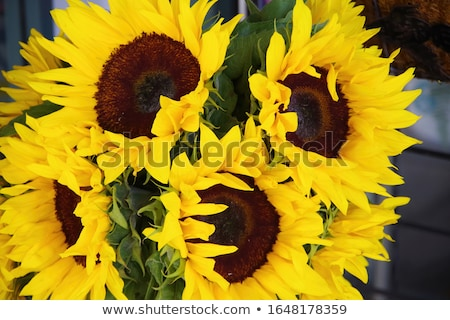 Full frame sunflowers Stock photo © badmanproduction