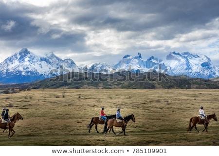 Patagonia Horse Stock photo © pancaketom