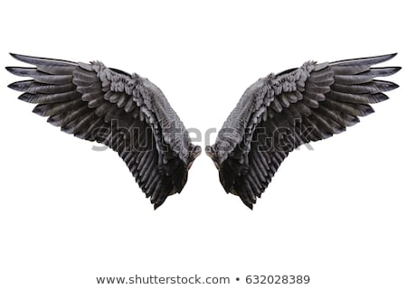 Wings Of Nature Stock photo © Lightsource