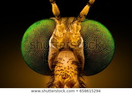 Vinç uçmak doğal yeşil yaprak makro Stok fotoğraf © Anterovium
