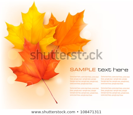 autumn vector leafs background  fall illustration with back light stock photo © orson