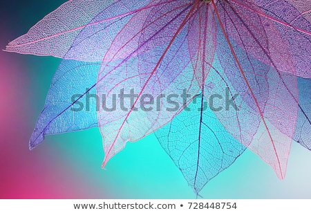 Abstract foliage background, beautiful tree branch in autumnal forest Stock photo © Zhukow