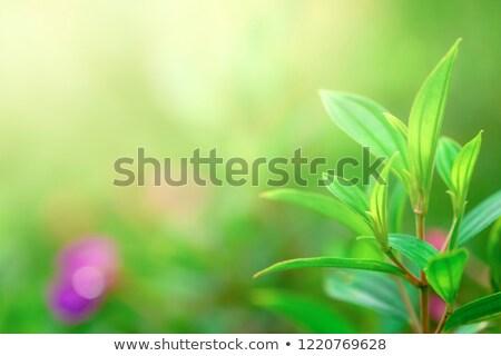 Hermosa exuberante verde jardín soleado Foto stock © Hofmeester